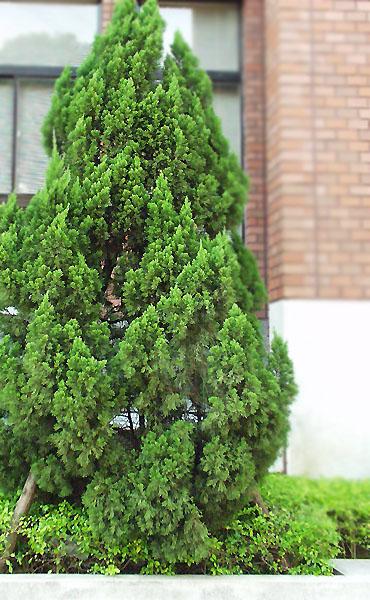 校园景观植物